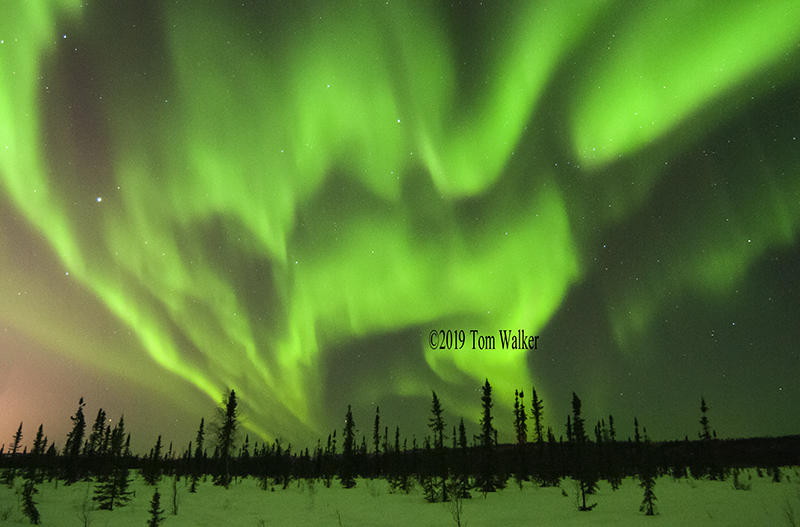Aurora, Tanana Valley, Winter, #766.