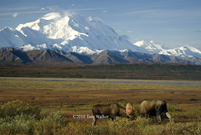 In the Shadow of Mt. McKinley