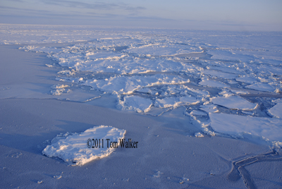Bering Sea Dawn